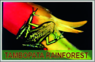 tambopata rainforest with amazon travel
