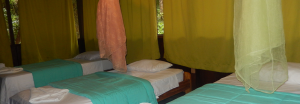 amazon lodge sandoval lake lodge peru wildlife adventures
